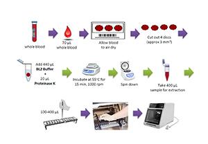 การสกัด DNA จากตัวอย่างหยดเลือดแห้งบนกระดาษกรอง