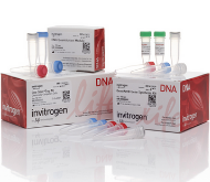 GeneArt® gene synthesis kit