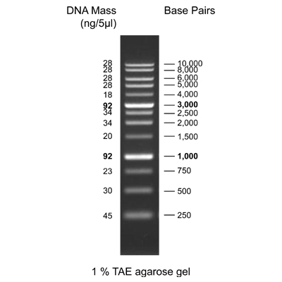 1KB DNA LADDER RTU, 500 UL.