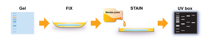 NIMBLE JUICE SPEEDY PROTEIN GEL STAIN, 10 ML.