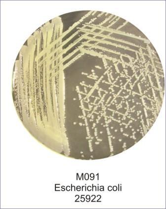 1HMD-M091-500G