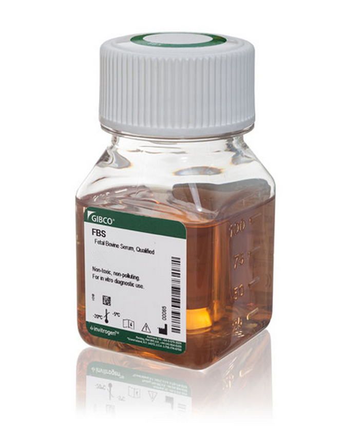 FETAL BOVINE SERUM, 100 ML
