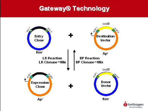 Gateway® technology