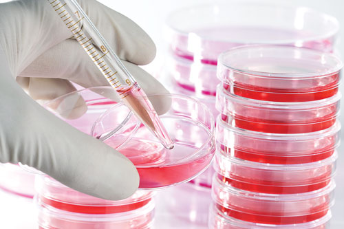 Cell Culture Medium (Part II)