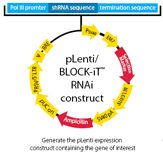 Block-iT RNAi Technologies