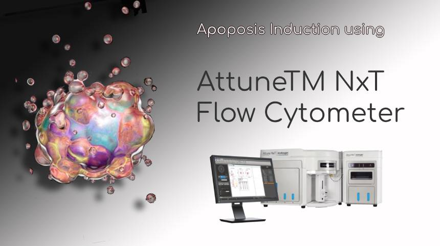 Apoptosis Induction using AttuneTM NxT Flow Cytometer