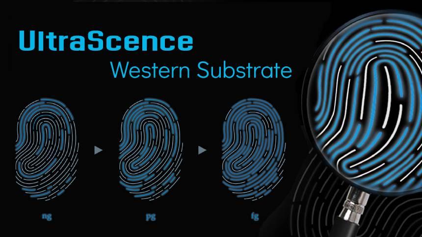 UltraScence TMB ELISA Substrate