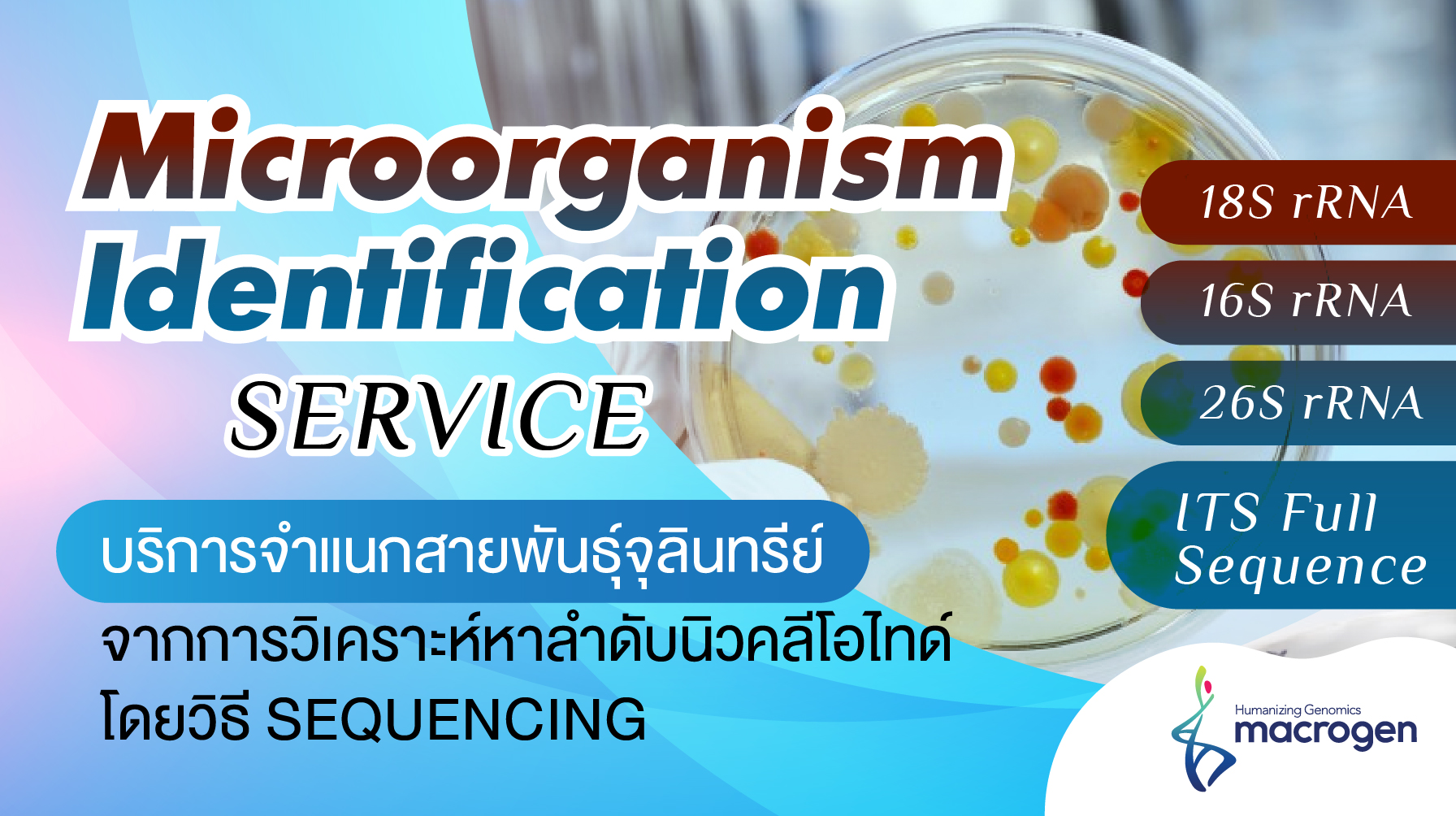 Microorganism identification service: 16S/18S/26S rRNA and ITS region