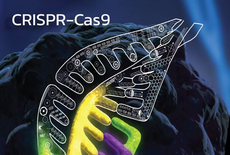 รูปแบบของ CRISPR guide RNA (gRNA) และการออกแบบด้วย TrueDesign tool